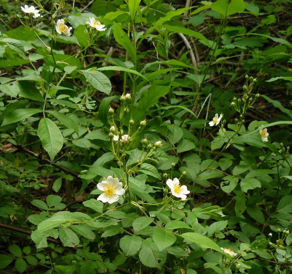 broad moor florist Broadmoor community church - colorado springs, colorado (co) - flowers same day delivery to broadmoor community church by a local florist in colorado springs.
