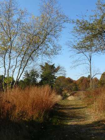 Old Orchard Trail and Little Bluestem