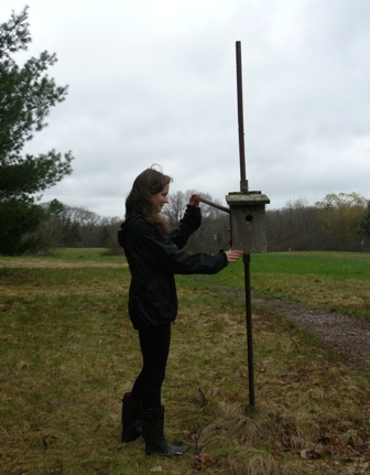 Volunteer checking nest box