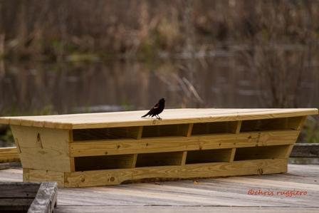 IMG_0754-RWB on bench  SSA
