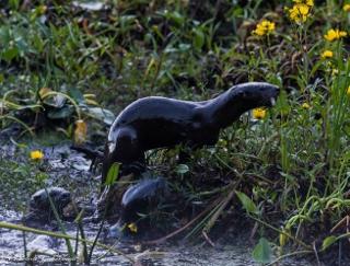 Otter family (320x243)