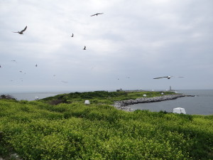 Great Gull Island, the view looking East.