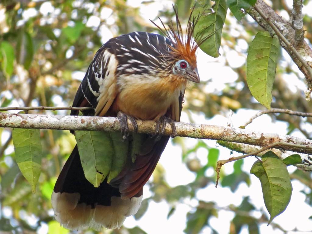 Mass Audubon Tour