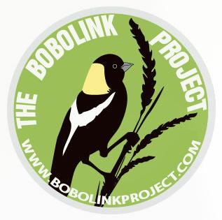 bobolink sticker