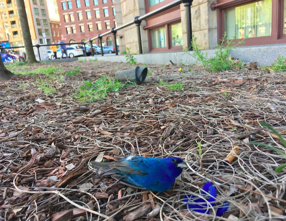 Distraction Displays | A Mass Audubon Blog