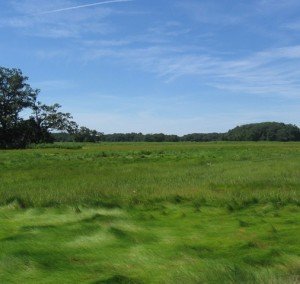 Additional land to be added to Rough Meadows Wildlife Sanctuary