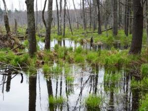 Wetlands at Fieldstone Farm