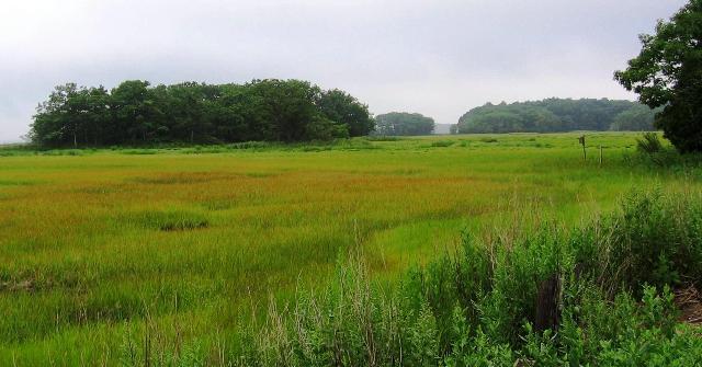 Rough Meadows1
