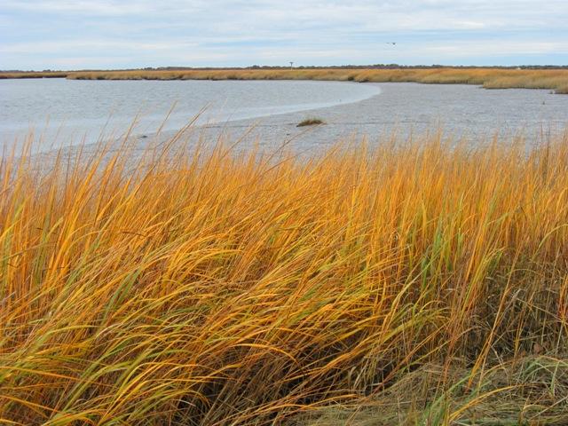 Marsh creek sm