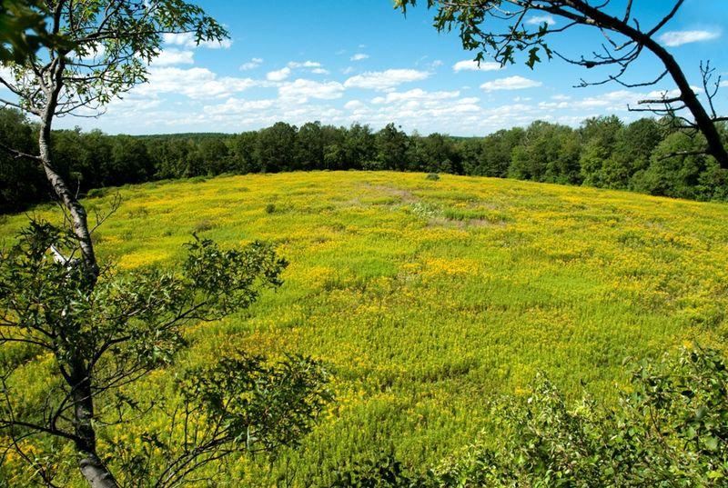 Meadow at Sibley Farm