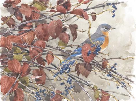 Barry-vandusen-bluebird
