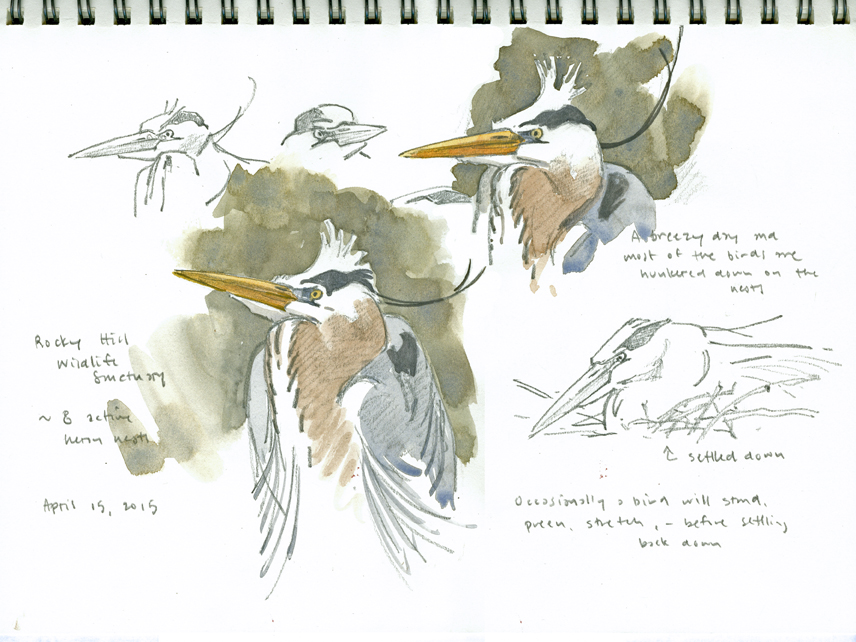 Heronry Studies, Rocky Hill - at 72 dpi