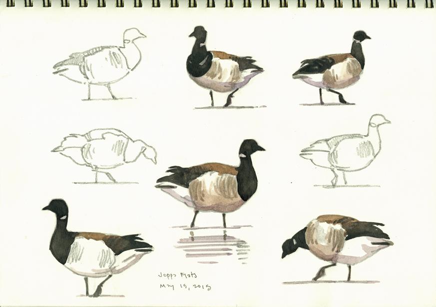 Brant studies 1, Joppa Flats - at 72 dpi