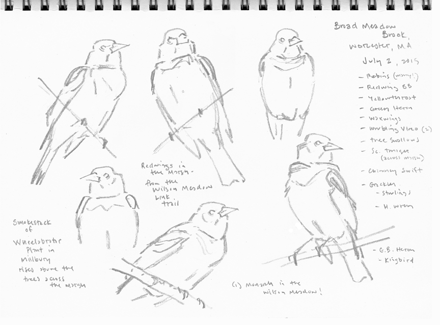 Redwing studies, Broad Meadow Brook - at 72 dpi