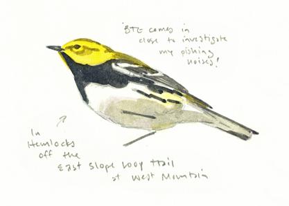 BTG Warbler study - at 72 dpi