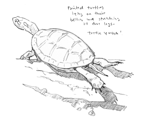 Turtle Yoga drawing - at 72 dpi