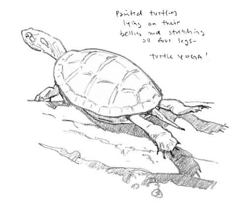 Turtle Yoga drawing - at 72 dpi