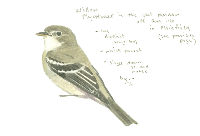 Willow Flycatcher sketchbook study - West Mtn- at 72 dpi