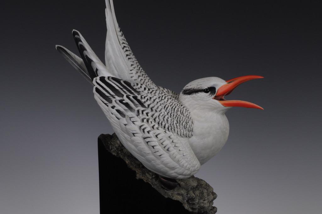 Barth Tropicbird sm