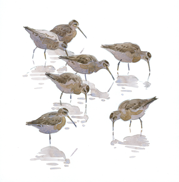 Dowitcher Flock - at 72 dpi