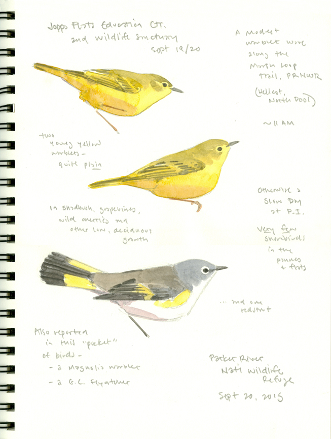 Fall Warblers at PRNWR - at 72 dpi