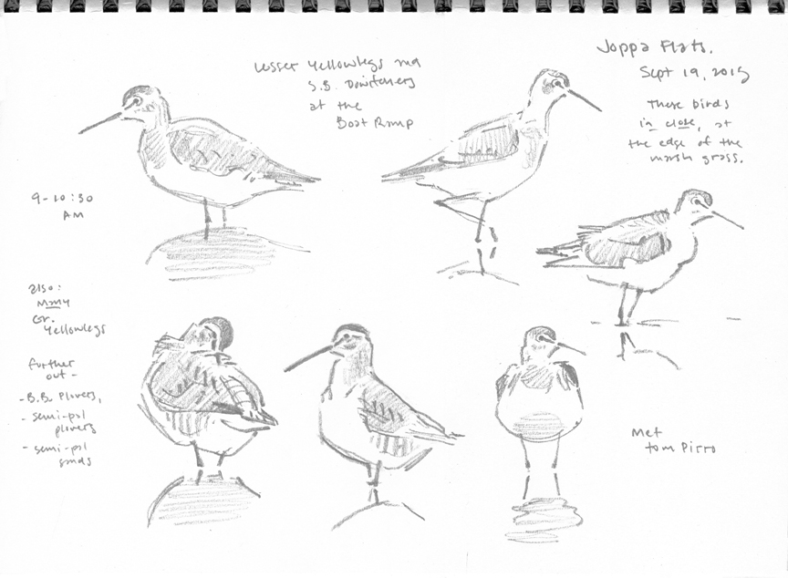 Shorebird Studies at the Boatramp, Newburyport - at 72 dpi
