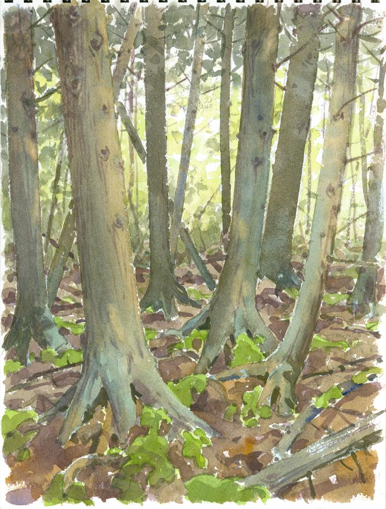 cedar grove chat sites View all patient testimonials chat location 97 cedar grove lane somerset, nj 08873 (732) 271-1220.