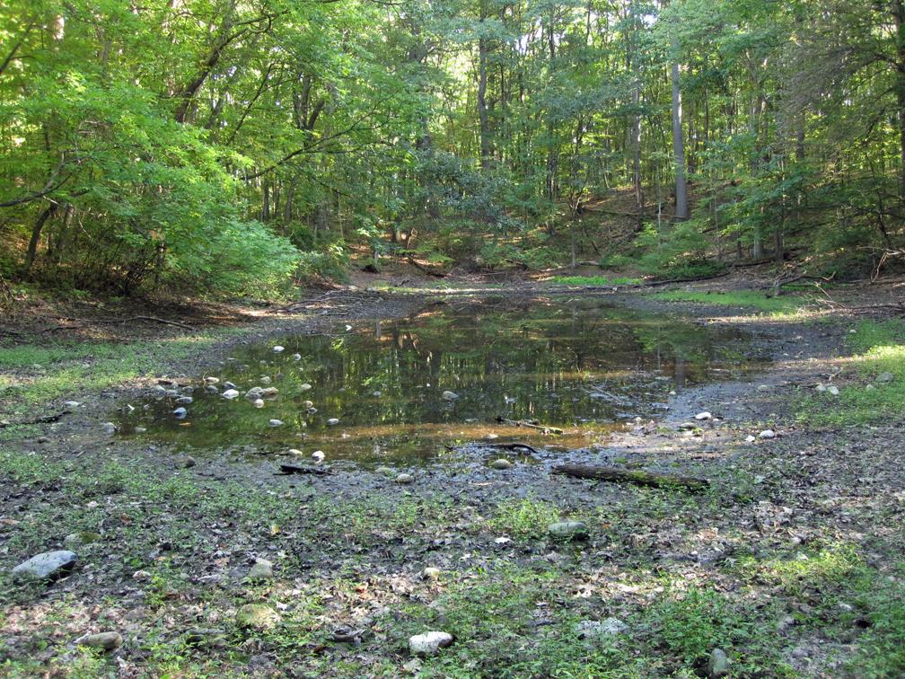Vernal Pool at Lincoln Woods - WET (small)