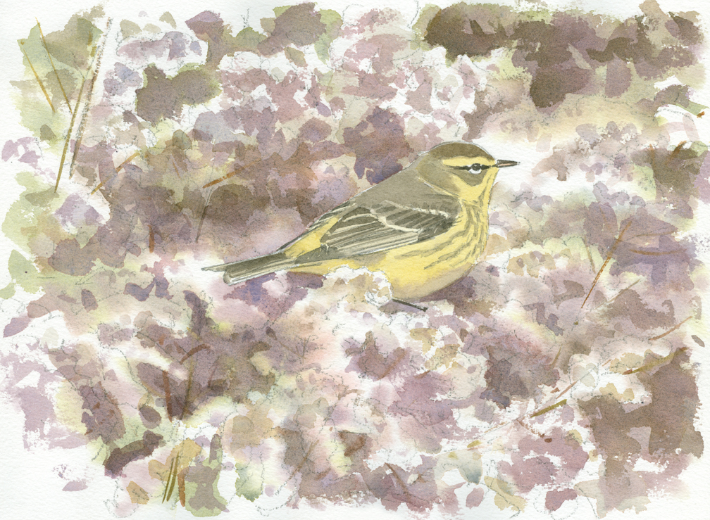 Palm Warbler in Goldenrod - at 72 dpi