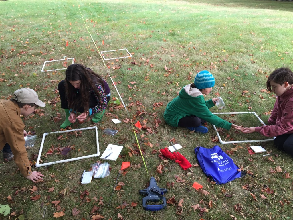 Ecology and Art homeschool students counting maple seeds along a transect