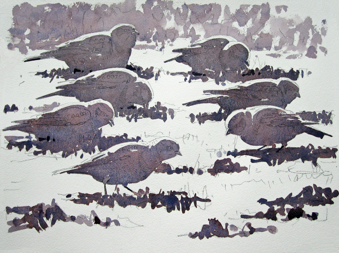 Snow Buntings STAGE 1 - at 72 dpi