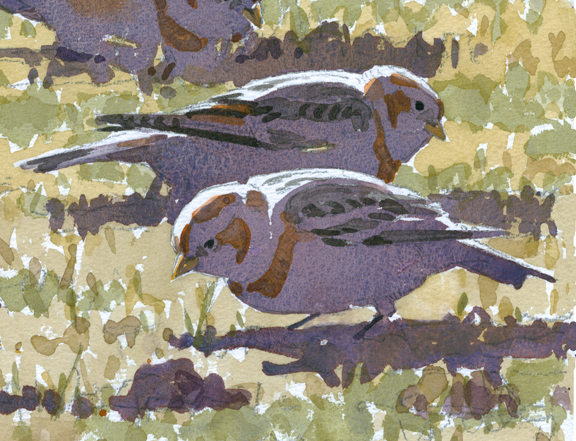 Snow Buntings (detail) - at 72 dpi