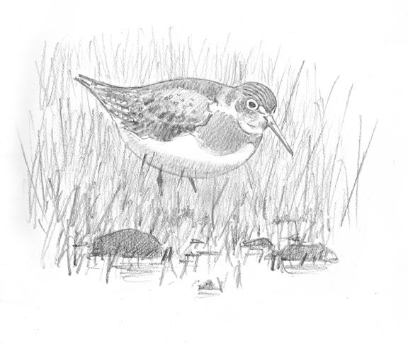 Solitary Sandpipers picture idea 2A - at 72 dpi