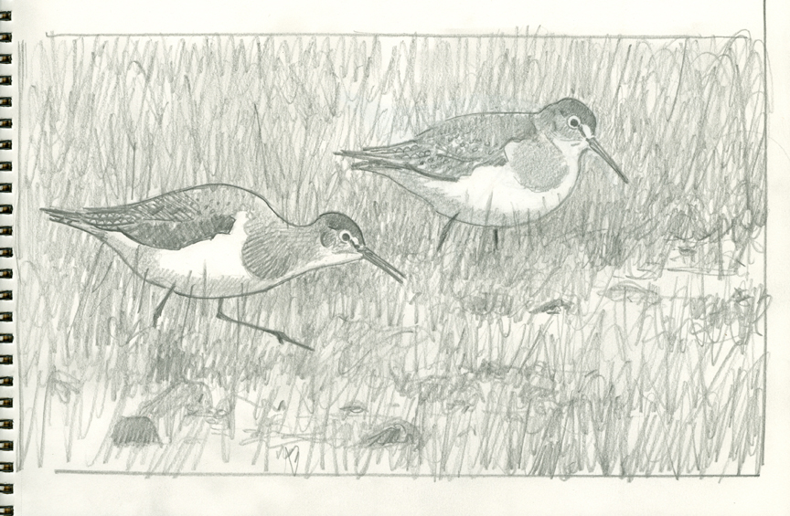 Solitary Sandpipers picture idea - at 72 dpi