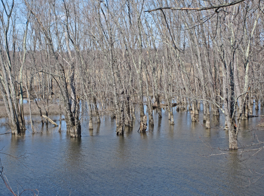 Floodplain Forest - at 72 dpi