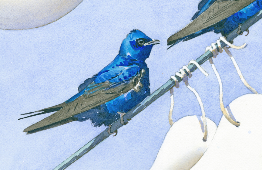 Purple Martins and Gourds DETAIL - at 72 dpi, retouched