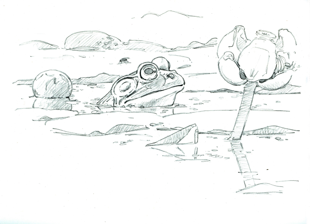 Bullfrog and Spatterdock - drawing at 72 dpi