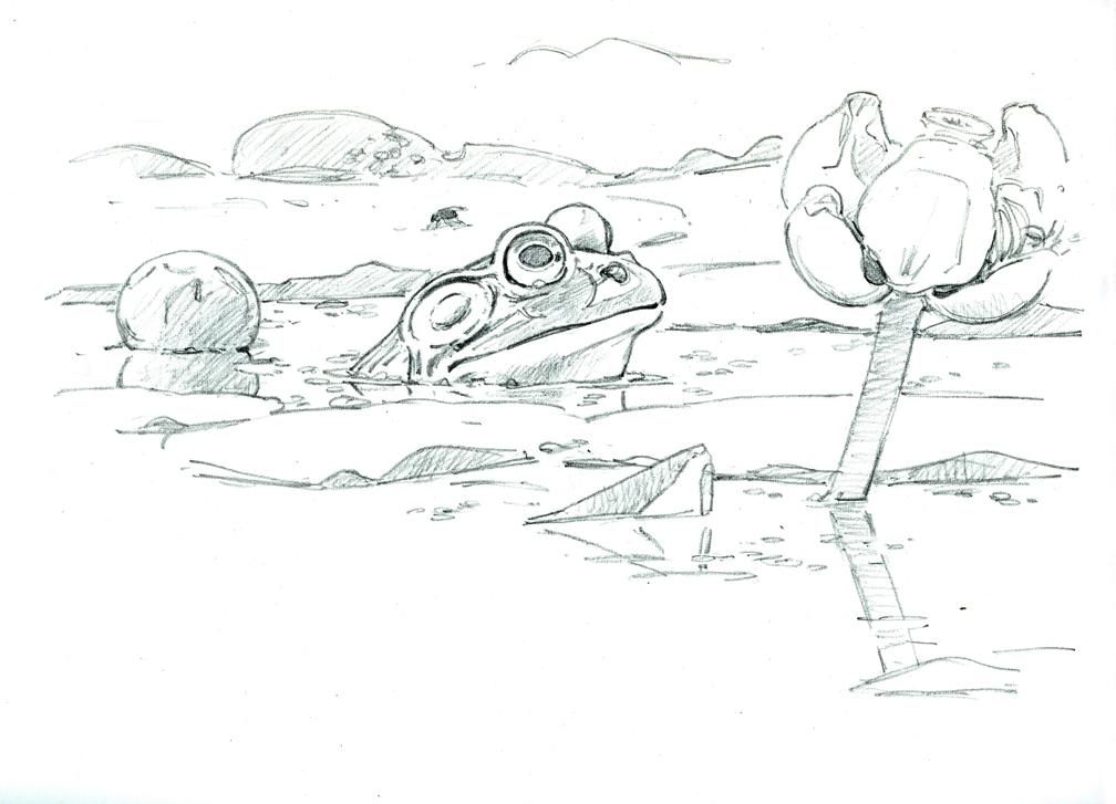 Bullfrog and Spatterdock - drawing at 72 dpi