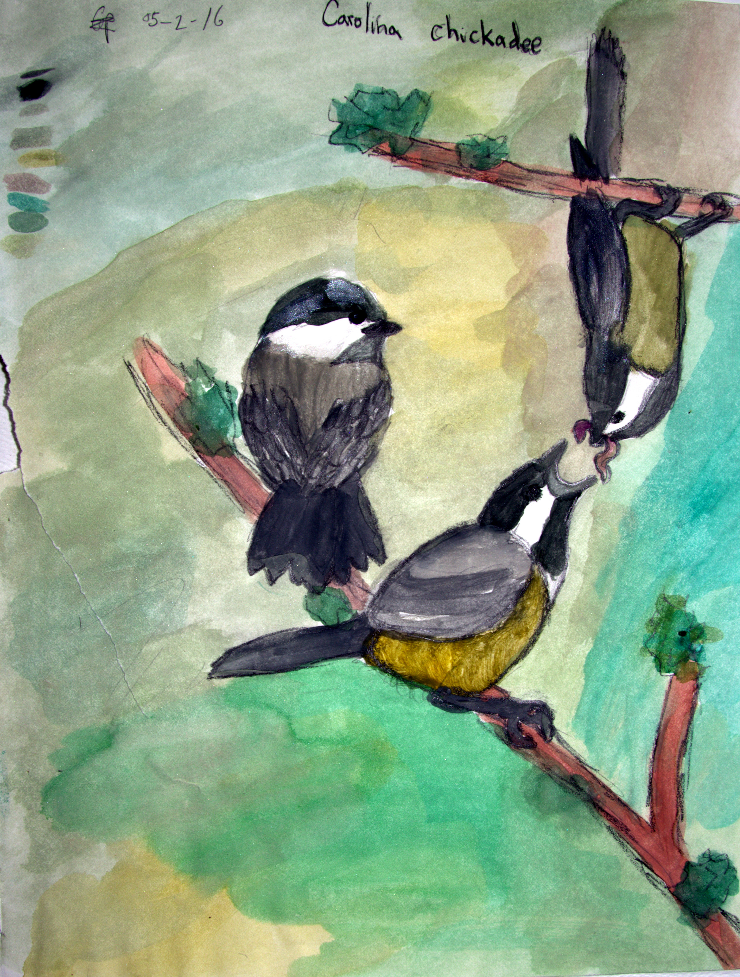 Chickadees, Carolina Perez, Age 10