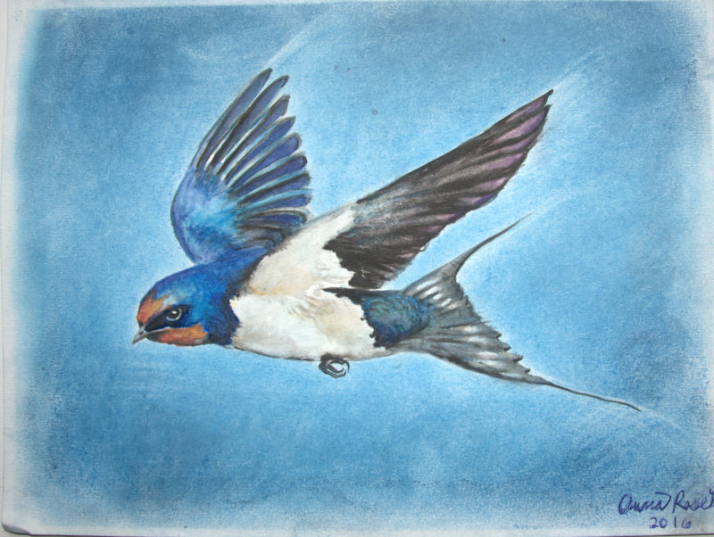 Anna Rose, Age 15, Barn Swallows
