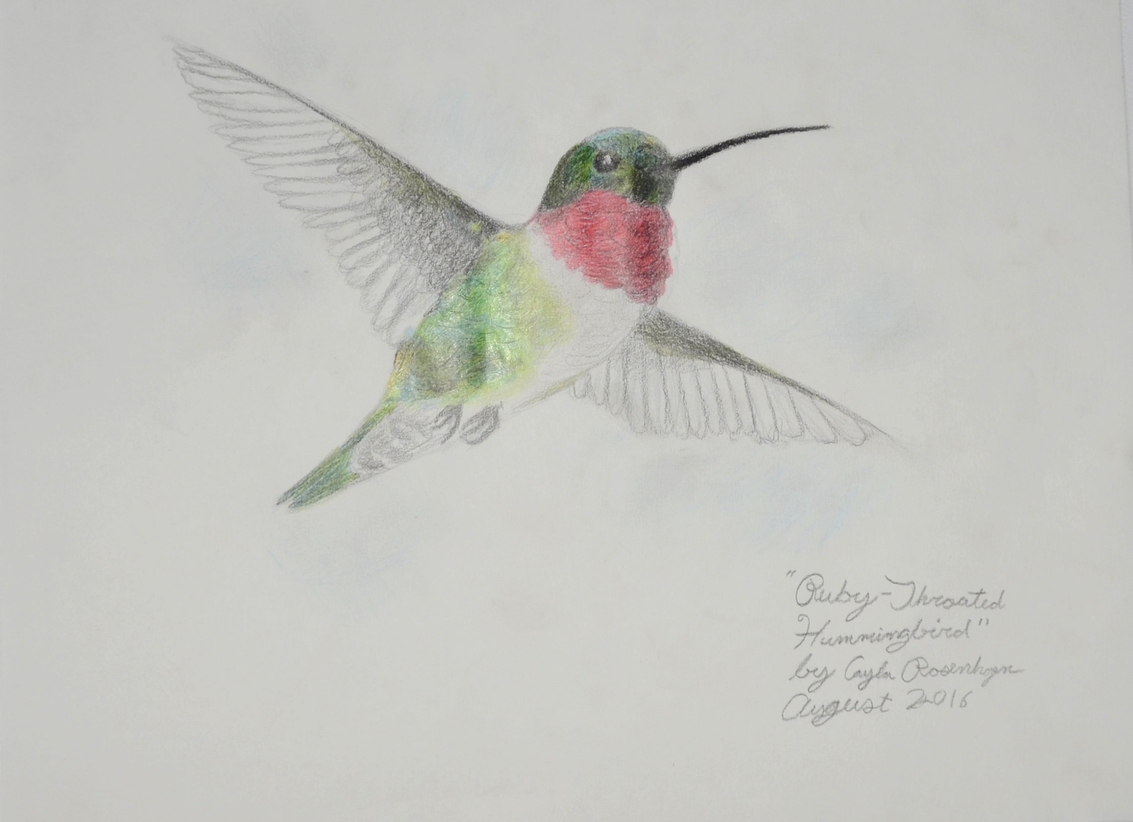 Cayla Rosenhagen, Age 11, Hummingbird