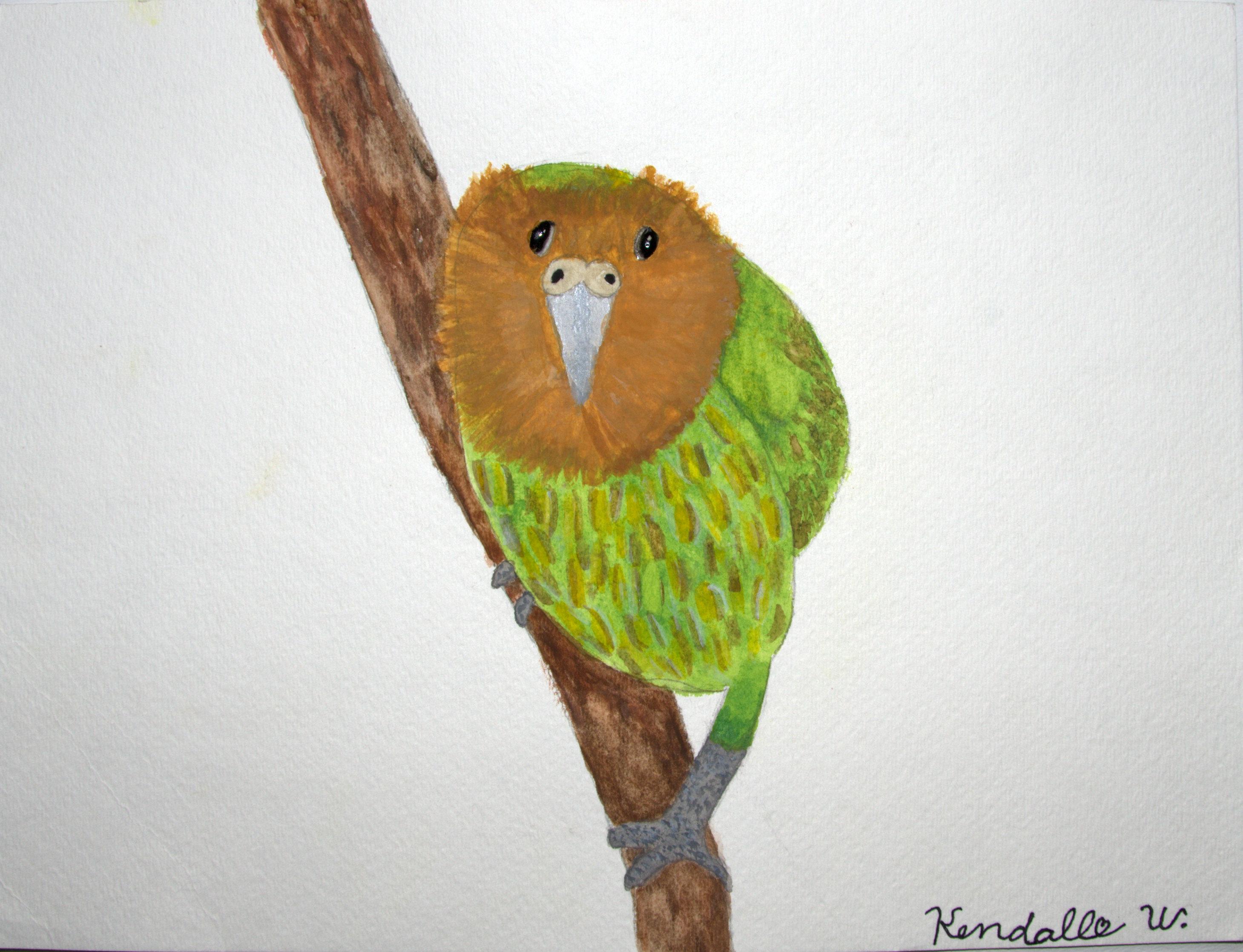 Kendall Winston, Kakapo, Age 10