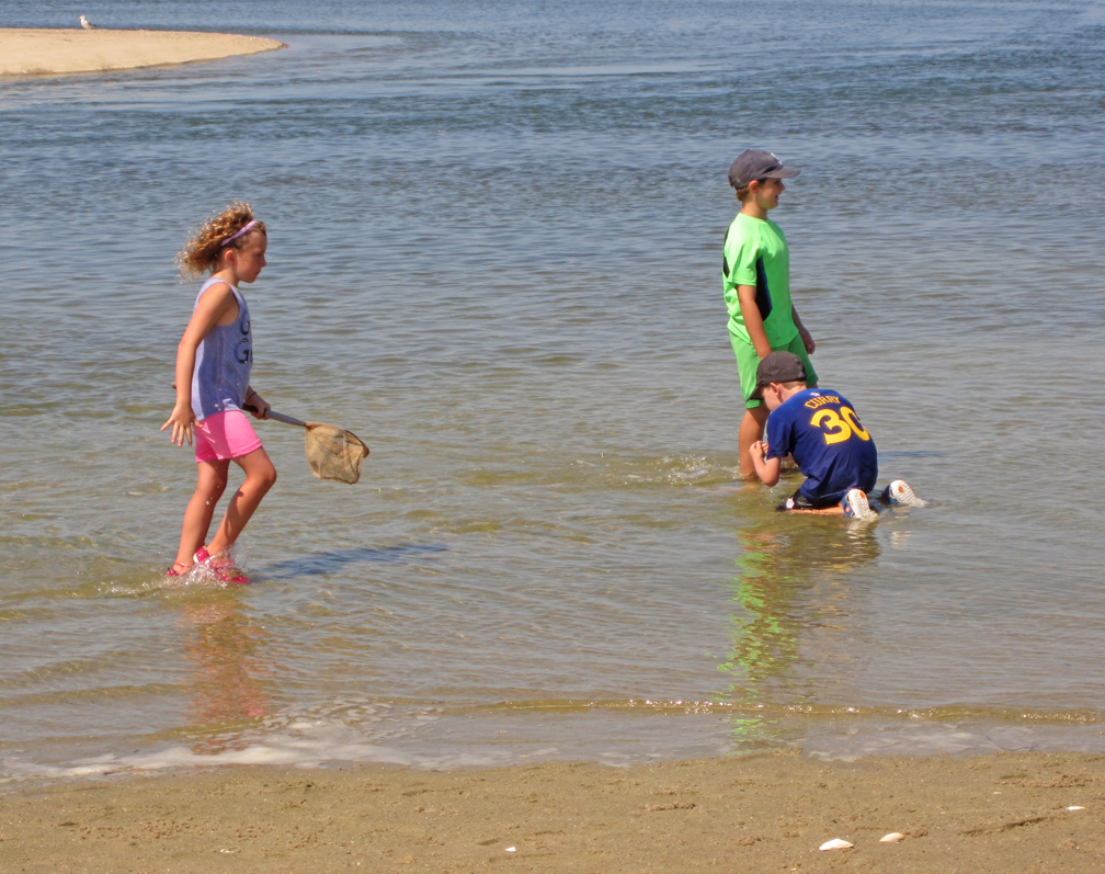 kids-exploring-the-marsh-wellfleet-bay-at-72-dpi