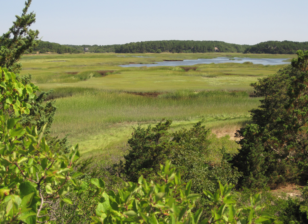 marsh-from-try-island-wellfleet-bay-at-72-dpi