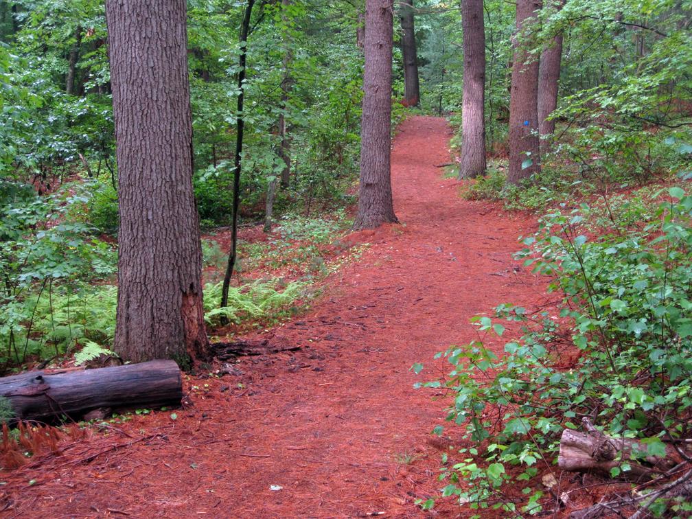 pine-grove-maba-at-72-dpi