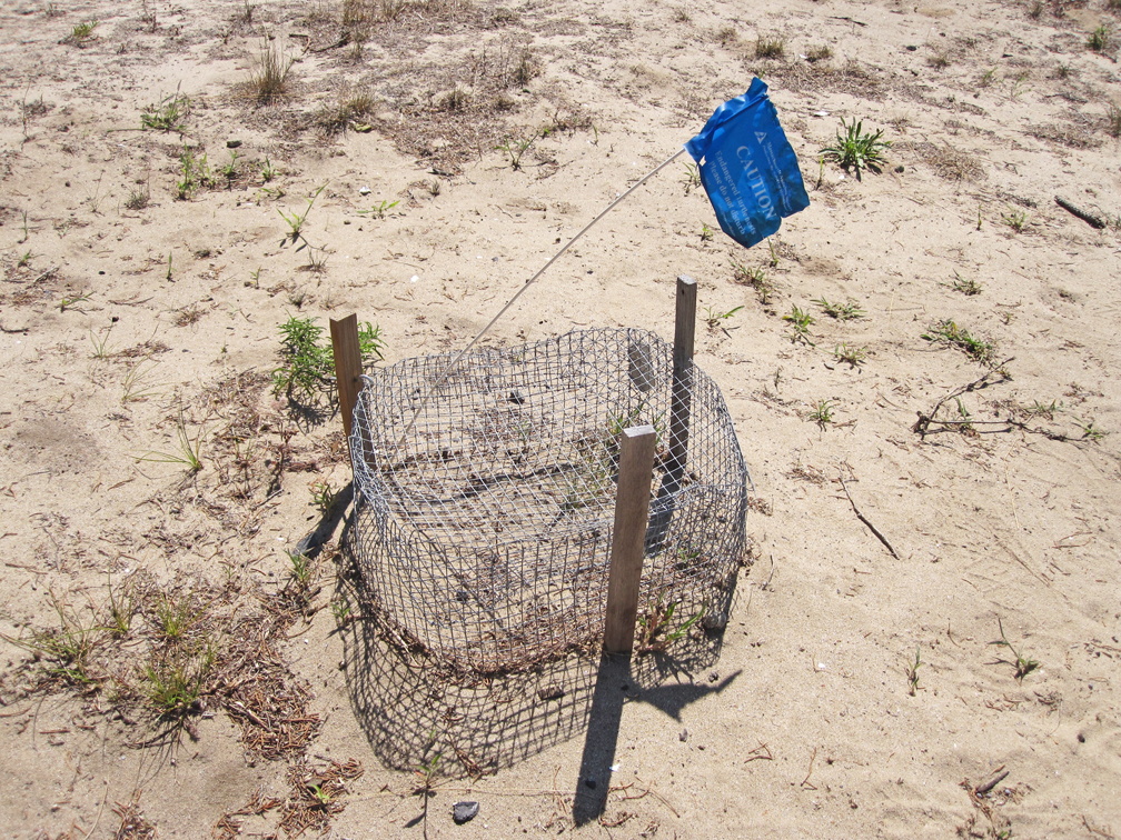 terrapin-nest-enclosure-wellfleet-at-72-dpi