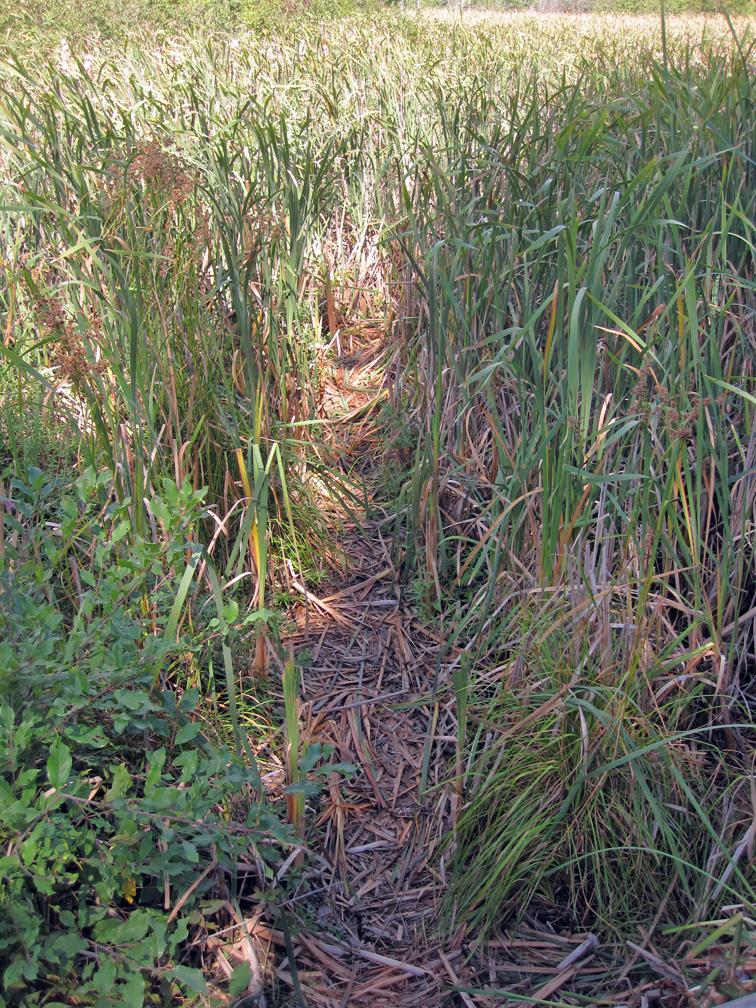 game-trail-at-bnc-at-72-dpi