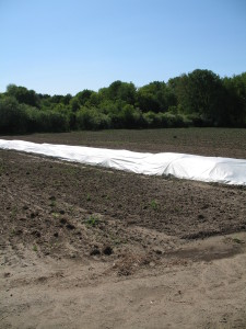 Plastic coverings keep our crops from freezing