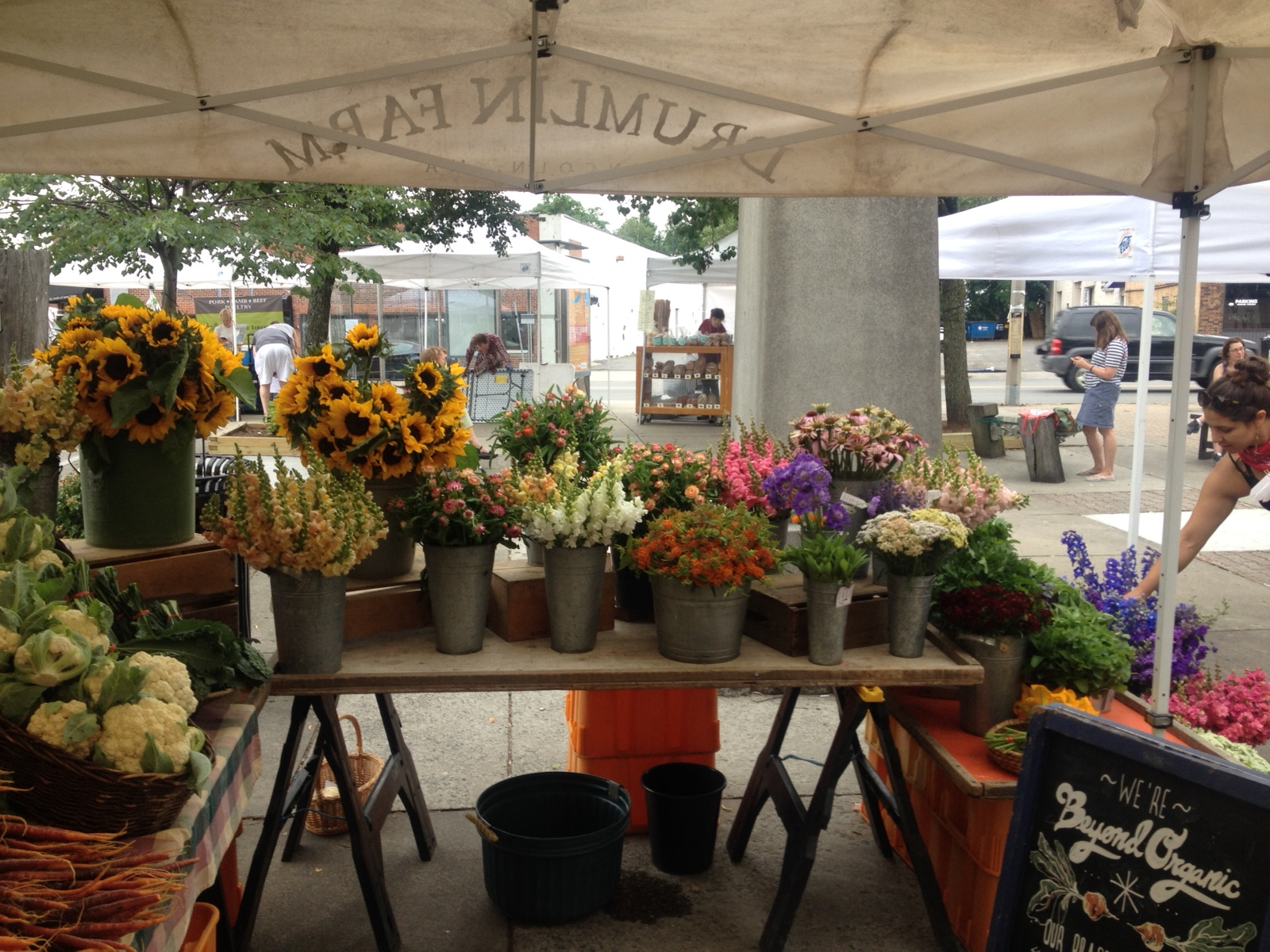 Drumlin Farm at the Union Square Farmers Market_2015 (1)