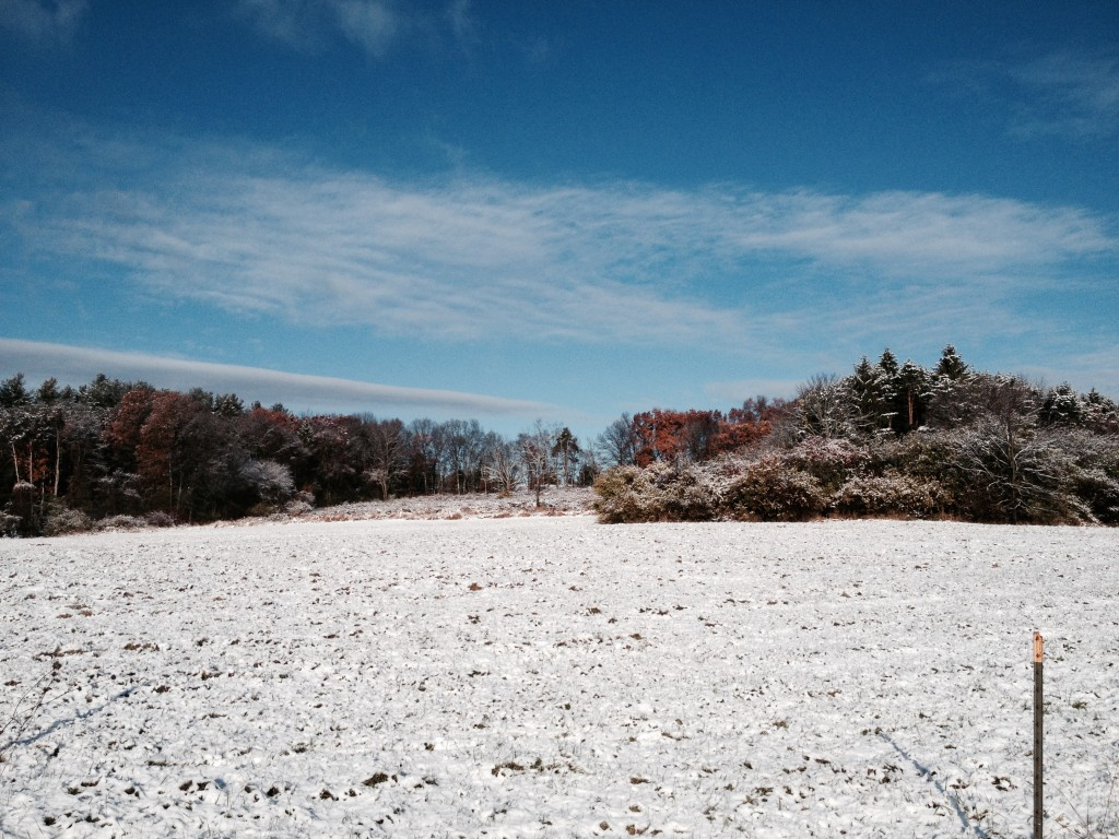 Bobolink snow AD
